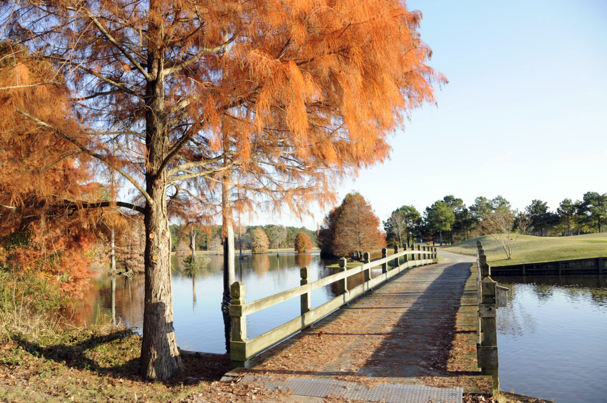 Fall Happenings in Myrtle Beach - Besides Fabulous Golf!